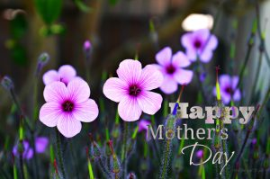 Happy Mother's Day - Fav Flower Madeira | by Art4TheGlryOfGod by Sharon for Happy Mother's Day Cindy post
